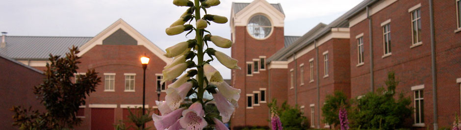 Armstrong Campus Header 3